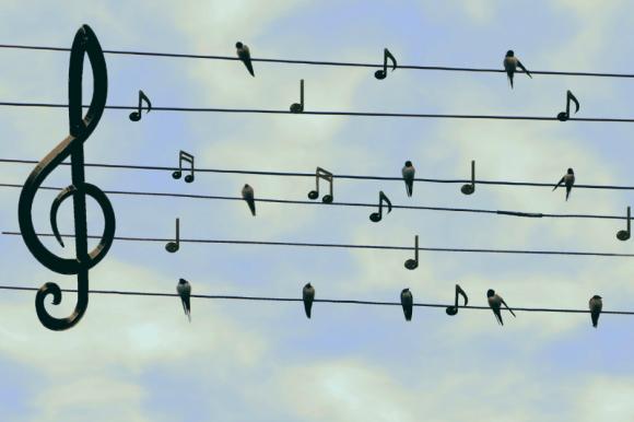 Na tle dziennego nieba druty wysokiego napięcia z nutami i ptakami.